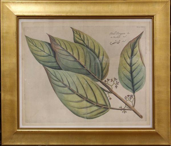 4007: Botanical Print