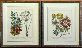 2079 Two Early 19th C Botanical Prints
