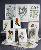 70+ Small Folio Botanical Prints