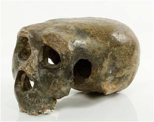 Pre human Skull Fossil
