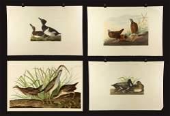 Four 20th C. Offset Audubon Lithographs