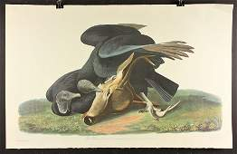 20th C. Offset Audubon Lithograph