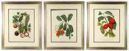 19th to 20th C. French Hand Colored Prints of Fruit