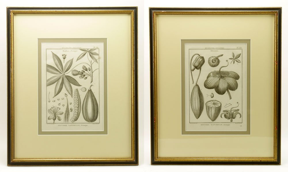 de Seve, Two Botanical Engravings