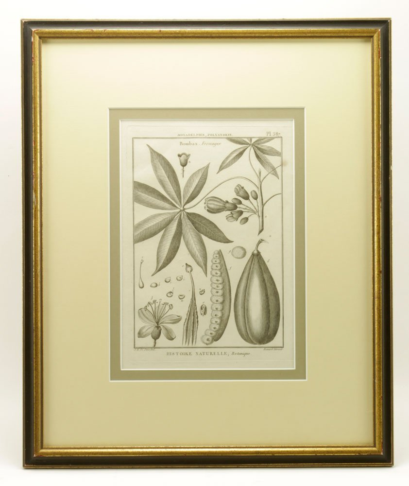 de Seve, Two Botanical Engravings - 2