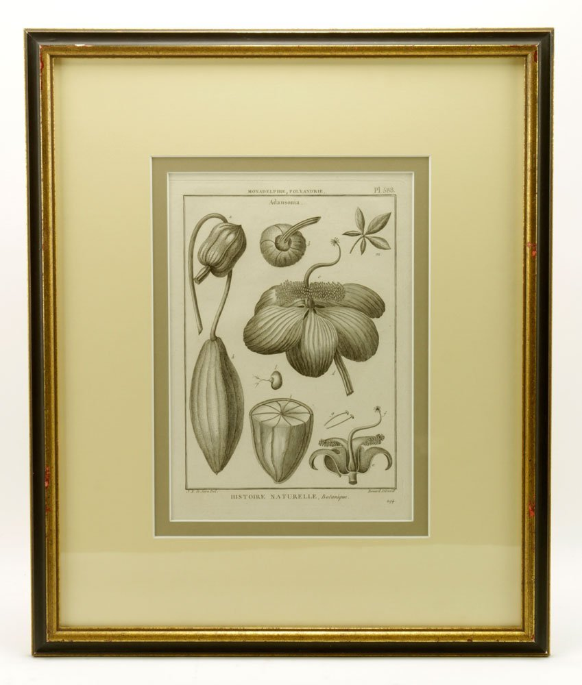 de Seve, Two Botanical Engravings - 4