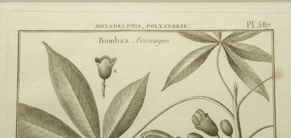 de Seve, Two Botanical Engravings - 6