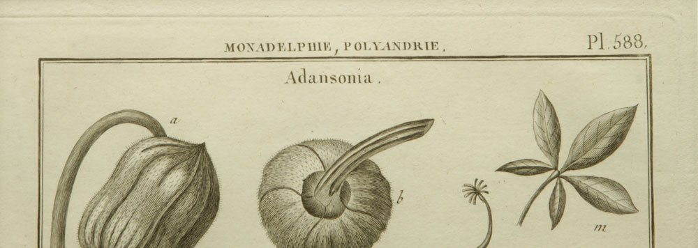 de Seve, Two Botanical Engravings - 8