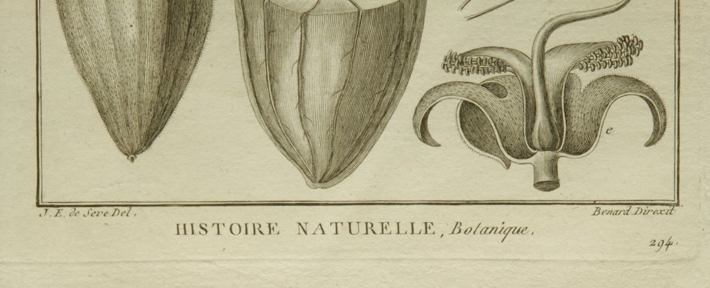 de Seve, Two Botanical Engravings - 9
