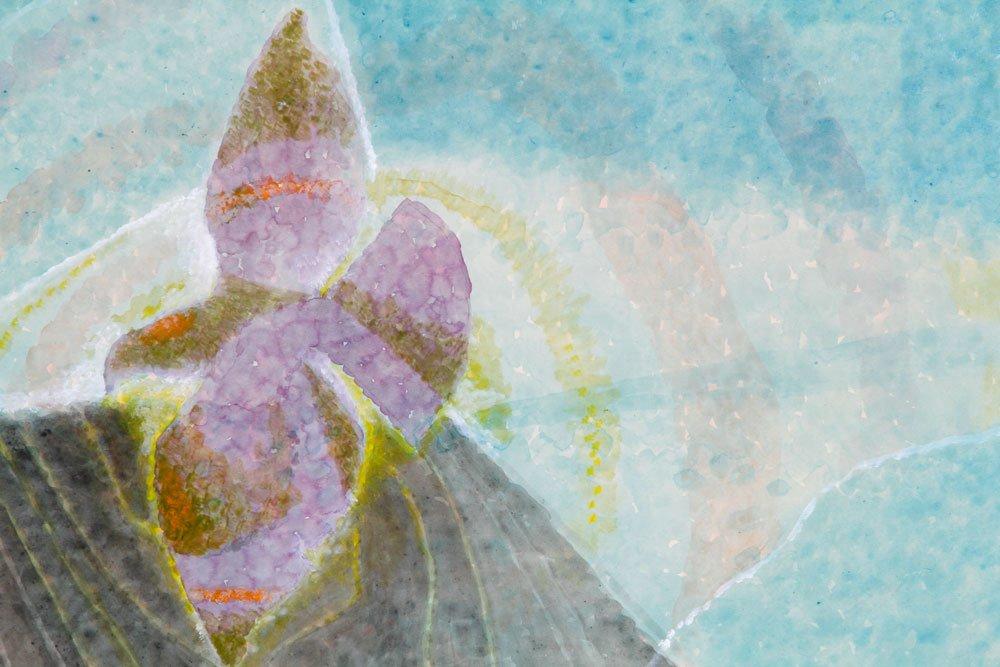 Abstract Iris, Watercolor - 2