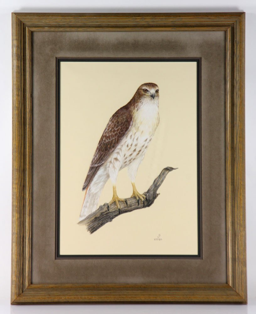 Red-Tailed Hawk, Pastel