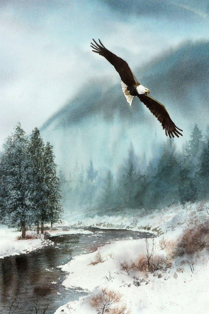 Flying Bald Eagle, Watercolor - 4