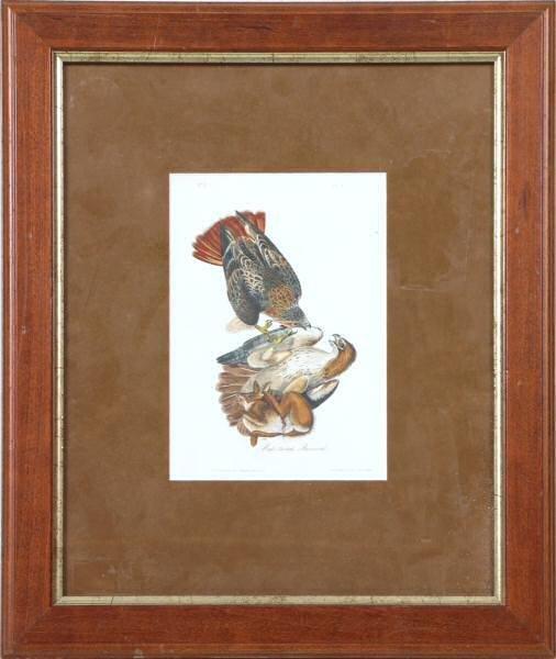 7: c. Mid 1800's Audobon print. Royal Octavo size, lith
