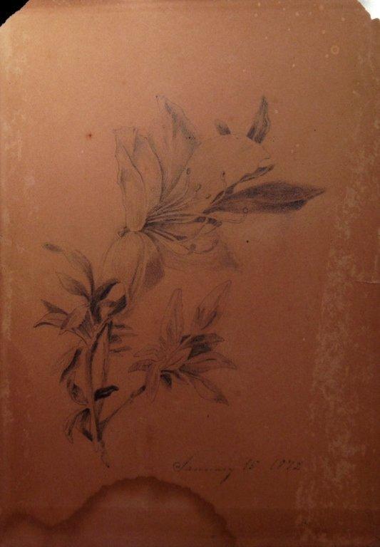 American Pre-Raphaelite Flower Drawings 1872