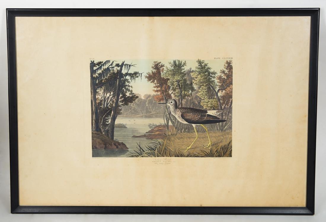 "19TH C. AUDUBON LITHOGRAPH Hand-colored, ""No. 58, Plate"