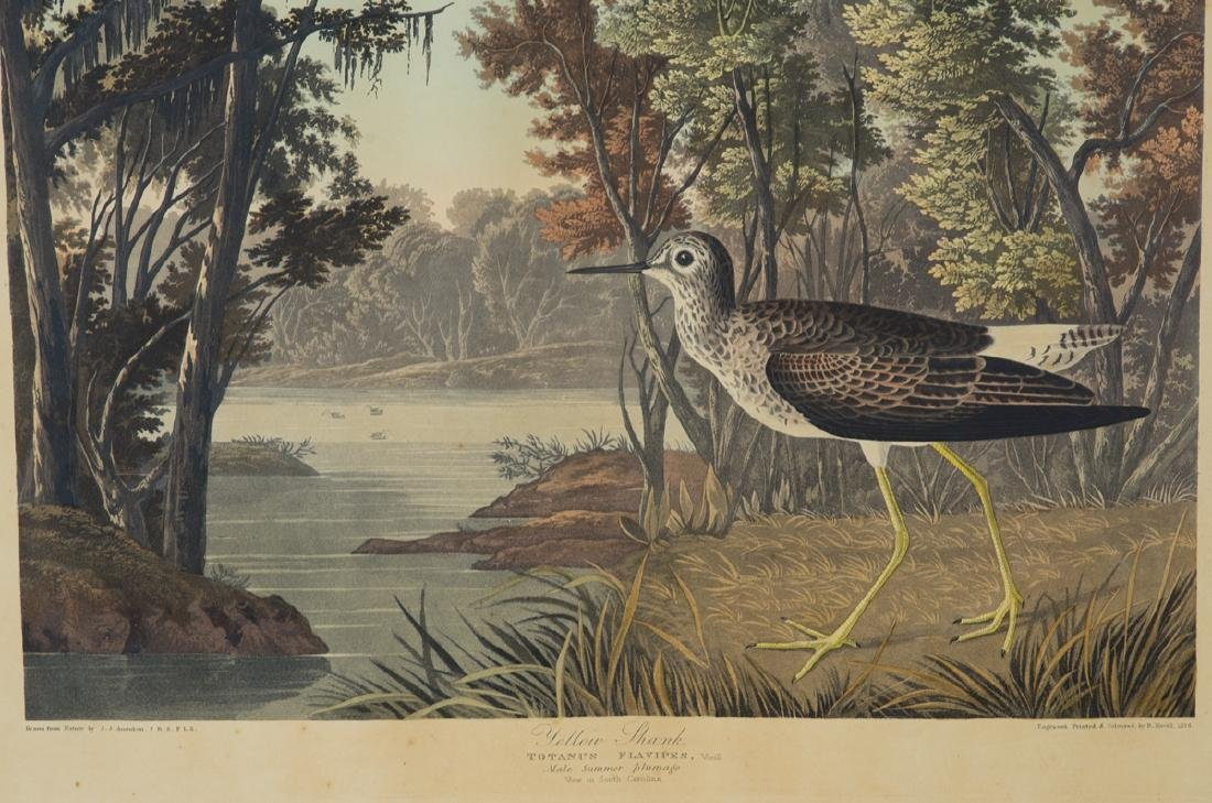 "19TH C. AUDUBON LITHOGRAPH Hand-colored, ""No. 58, Plate - 2"