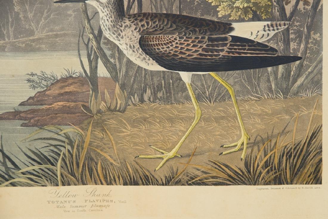 "19TH C. AUDUBON LITHOGRAPH Hand-colored, ""No. 58, Plate - 3"