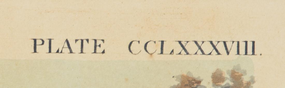 "19TH C. AUDUBON LITHOGRAPH Hand-colored, ""No. 58, Plate - 4"