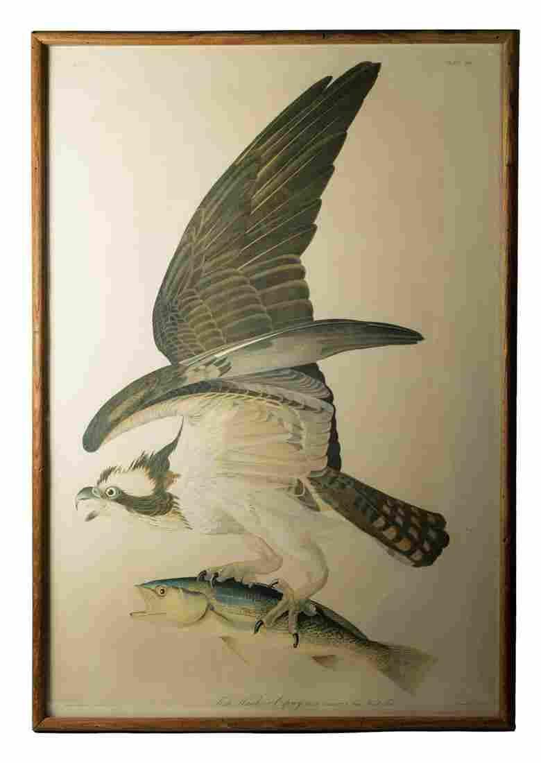 OSPREY AUDUBON PRINT Audubon, John James (1785-1851),