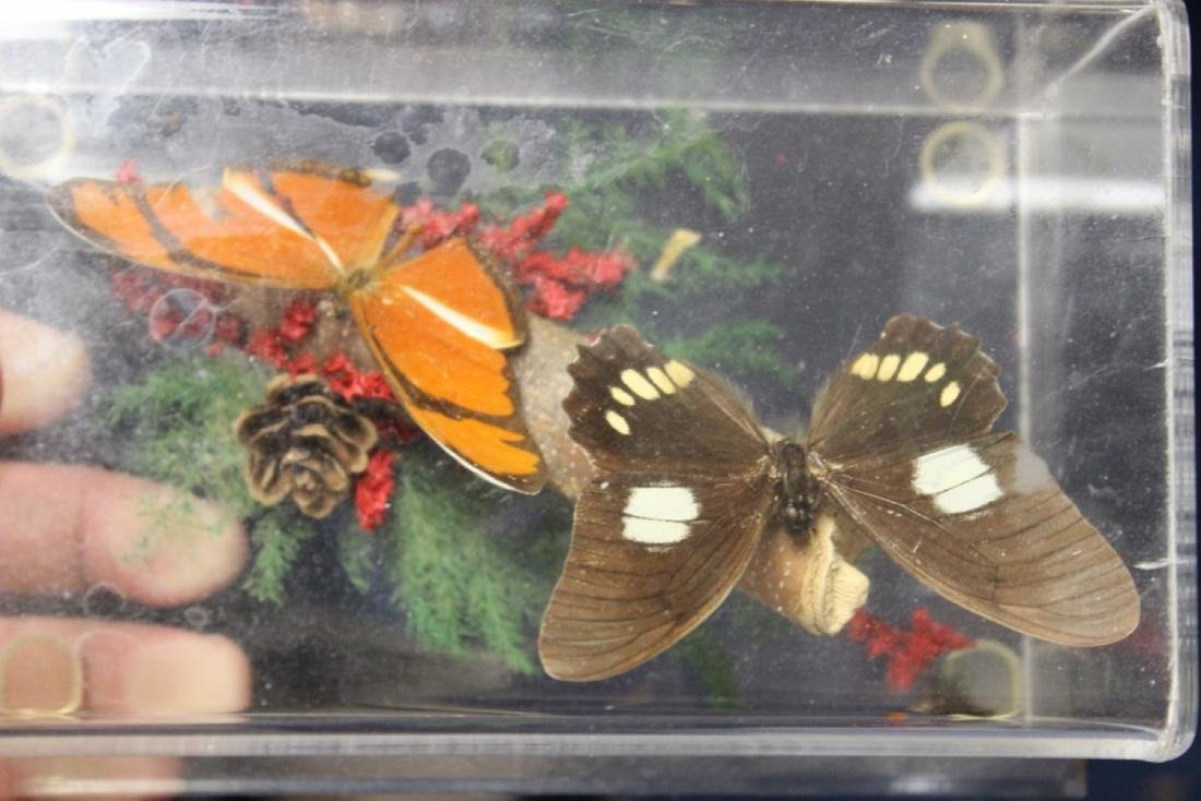 A Lucite Cube With Butterflies
