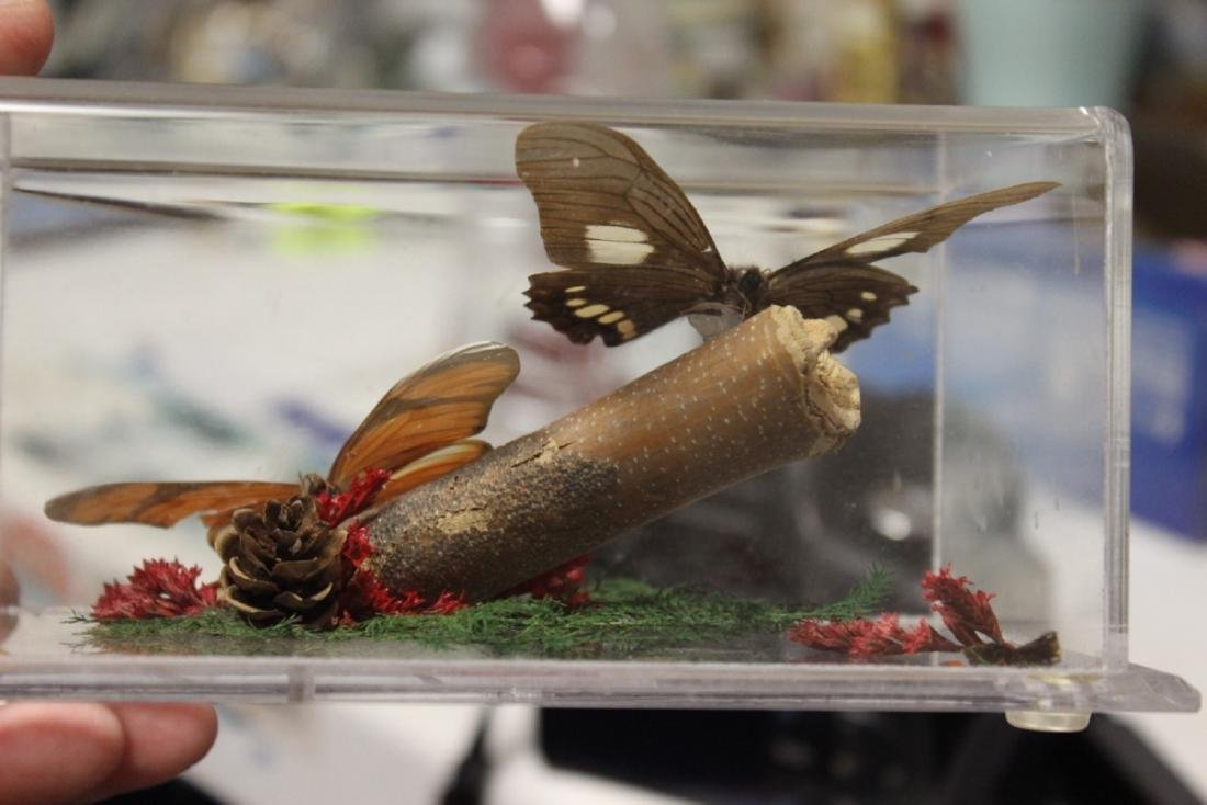 A Lucite Cube With Butterflies - 2