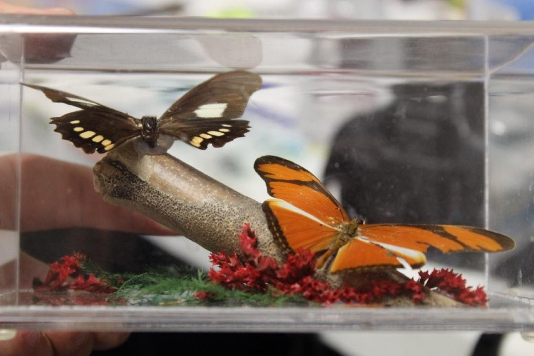 A Lucite Cube With Butterflies - 3
