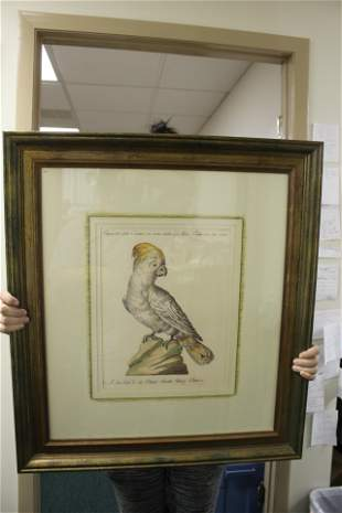 A Framed Print of a Parrot