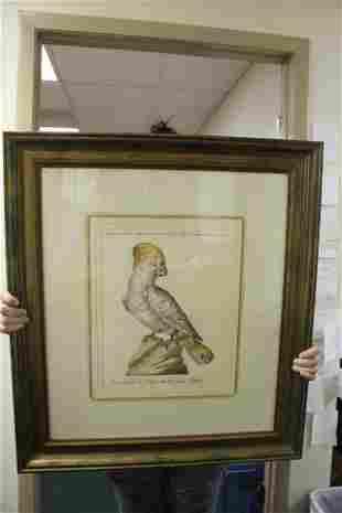 A Framed Print of a Parrot