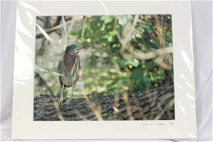 A Signed Bird Photograph