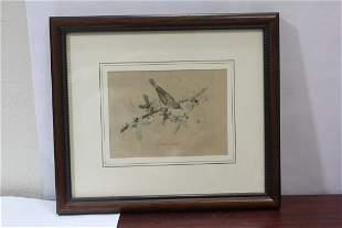 A Bird Print or Engraving
