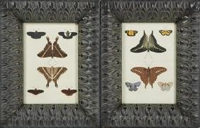 Pair of Butterfly Prints, late 19th c., presented in