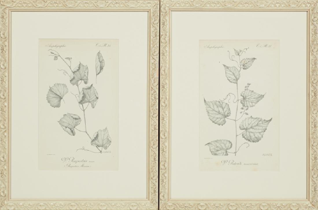 """Henri Gillet, """"V. Retordi,"""" and """"V. Rupestris,"""" late"""
