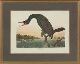 "John James Audubon (1785-1851), ""Florida Cormorant,"""