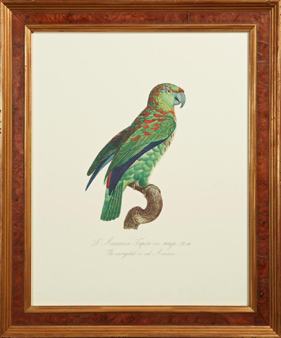 "Francois Levaillant (1753-1824), ""L'Amazone Tapire en"