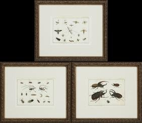 """Insects,"" 20th c., group of three colored prints"