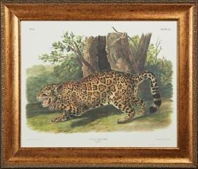"""John James Audubon (1785-1851), """"The Jaguar,"""