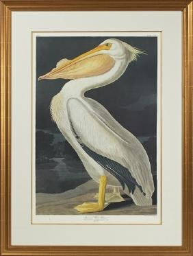 "John James Audubon (1785-1851), ""American White"
