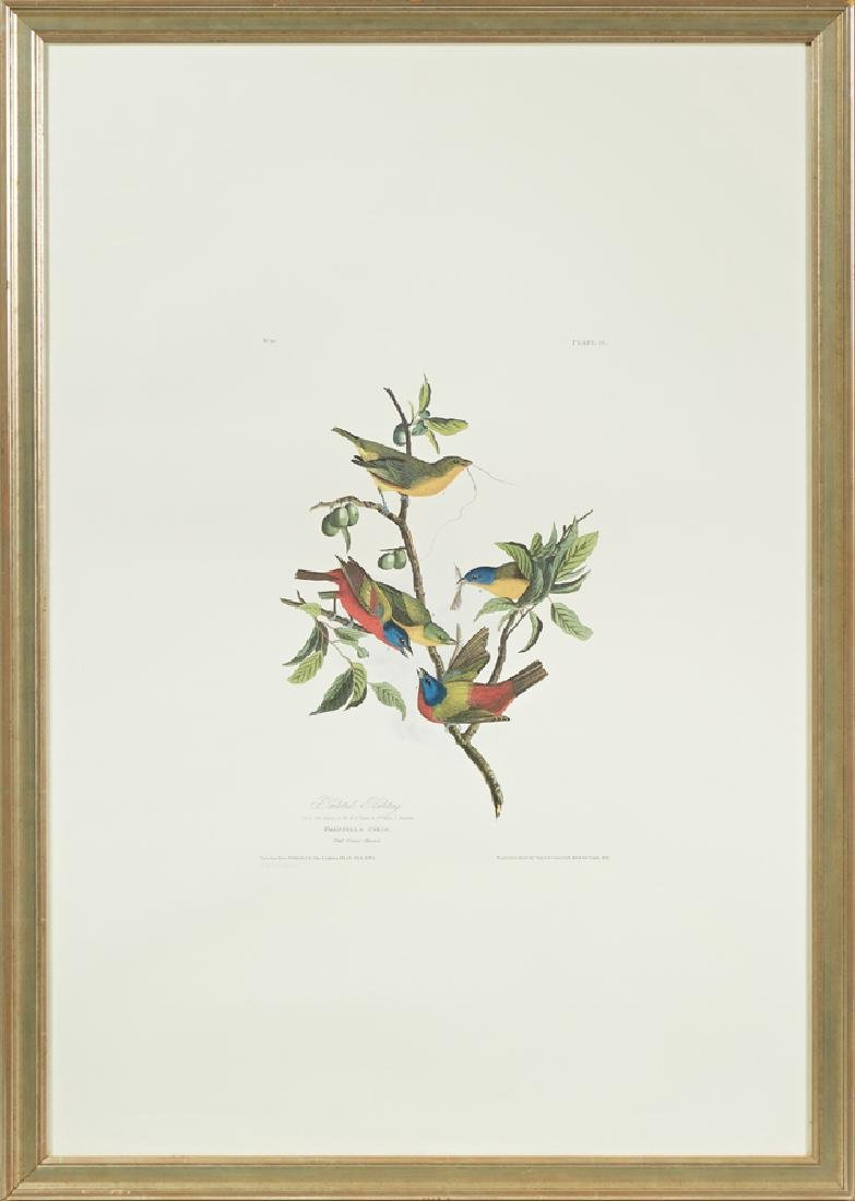 "John James Audubon (1785-1851), ""Painted Bunting,"" No."