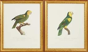 """Francois Levaillant (1753-1824), """"Le Perroquet a"""