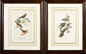 "John James Audubon (1785-1851), ""Maryland"
