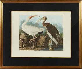 "John James Audubon (1785-1851), ""White Ibis,"" No. 45,"