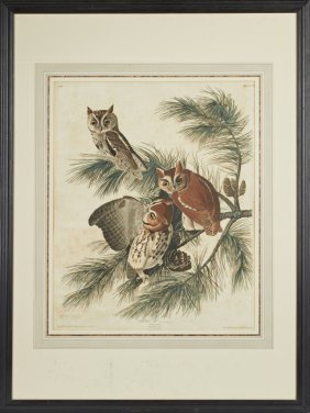 "John James Audubon (1784-1851), ""Mottled Owl,"" No. 20,"