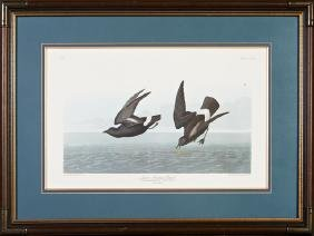 "John James Audubon (1785-1851), ""Least Stormy Petrel,"""