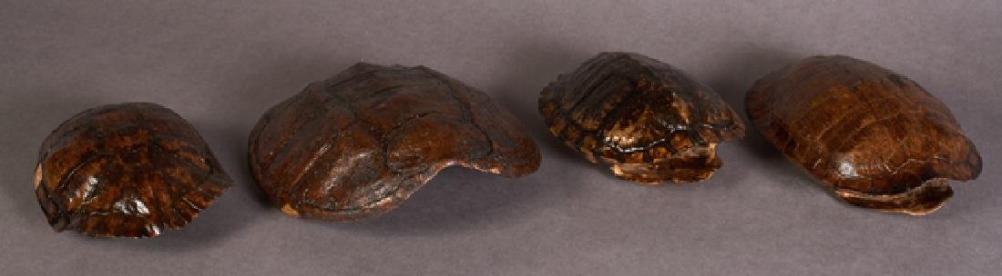Group of Four Turtle Shells, 20th c., Mississippi,
