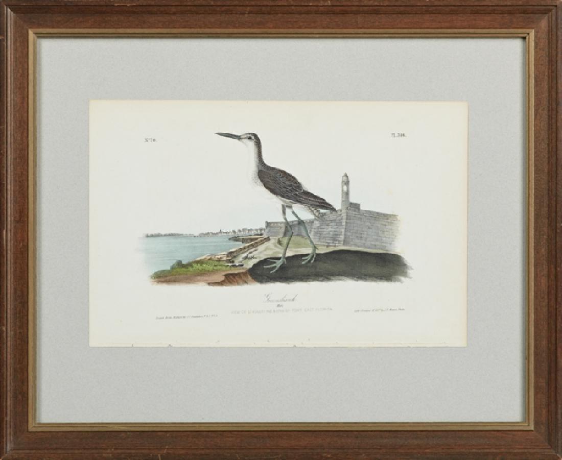 "John James Audubon (1785-1851), ""Green Shank,"" No. 70,"