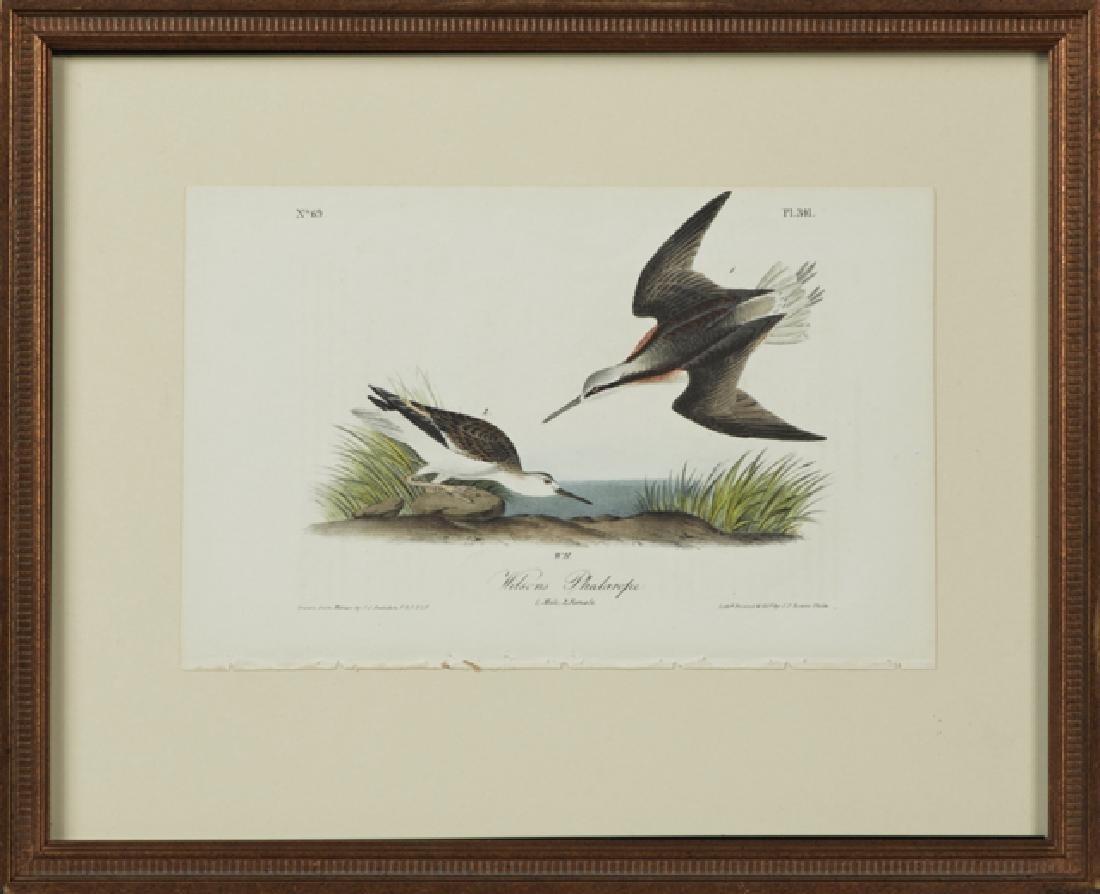 "John James Audubon (1785-1851), ""Wilson's Phalarope,"""