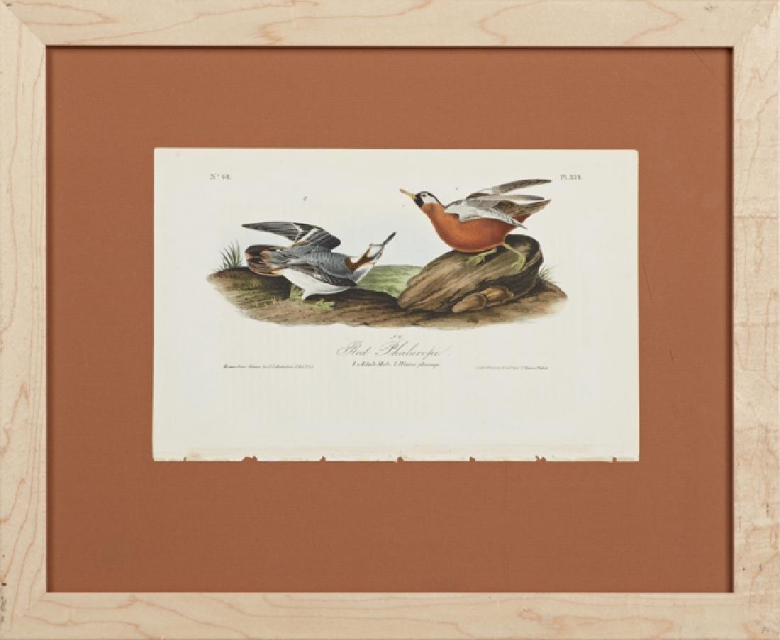 """John James Audubon (1785-1851), """"Red Phalarope,"""" No."""