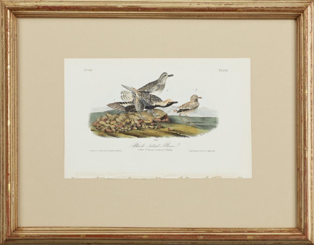 """John James Audubon (1785-1851), """"Black-bellied Plover,"""""""