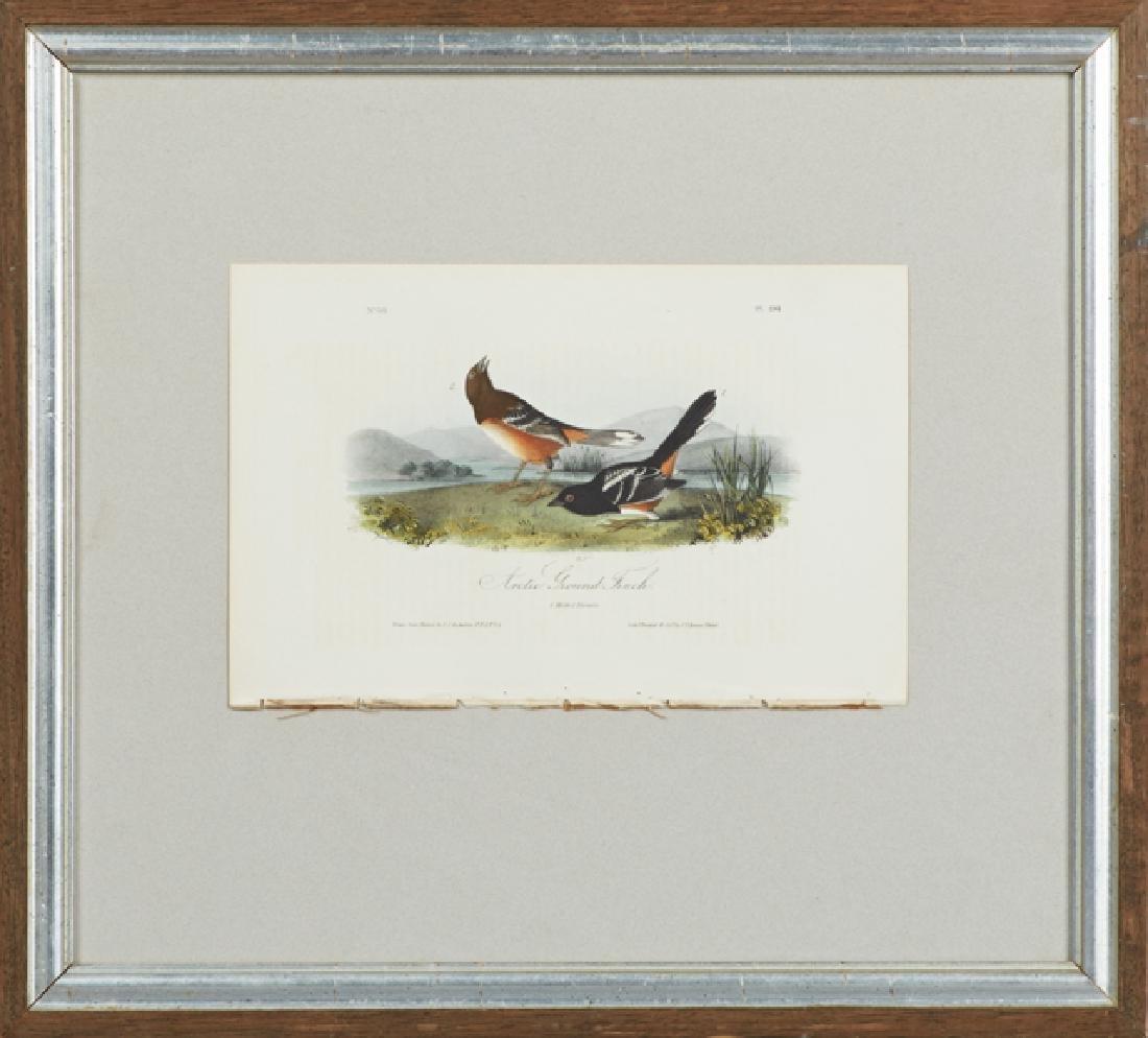 "John James Audubon (1785-1851), ""Arctic Ground Finch,"""