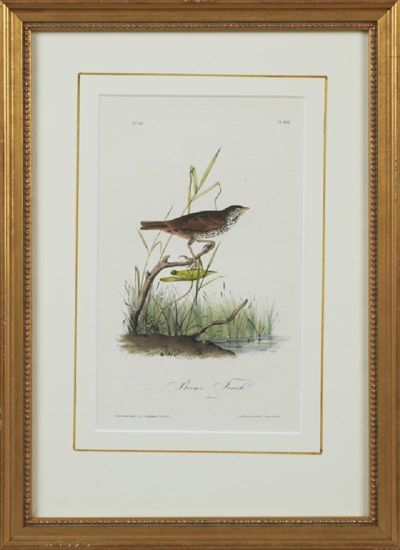 """John James Audubon (1785-1851), """"Brown Finch,"""" No. 38,"""
